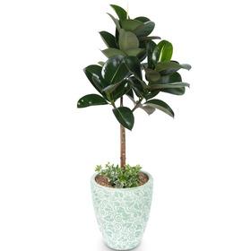 고무나무 s9602