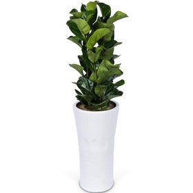 떡갈나무 s9620