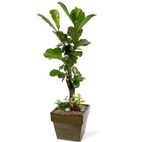 떡갈나무 s133