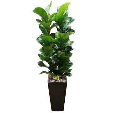 떡갈나무 s2033
